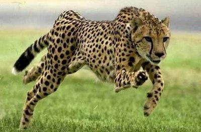 africano.jpg